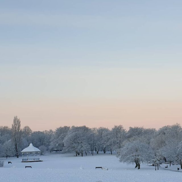 Morning walk in Locke Park.